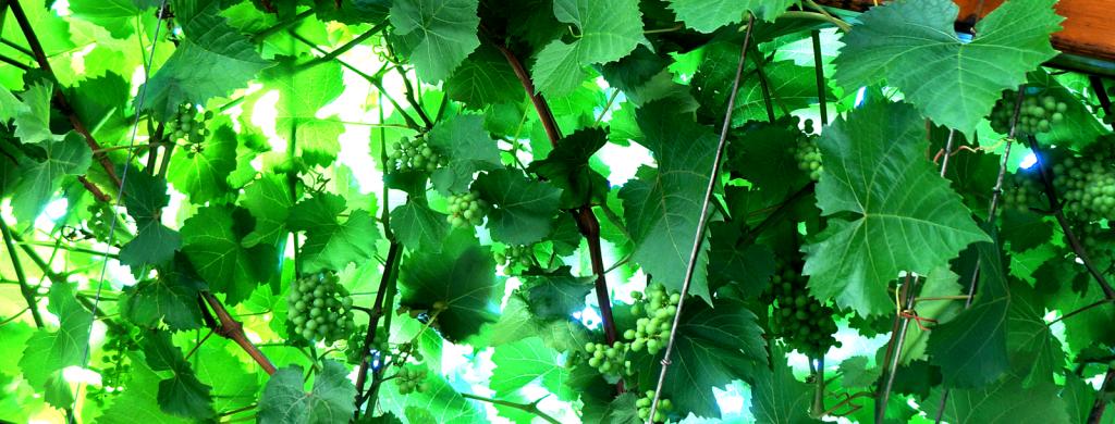Weinbau Zistler ROT
